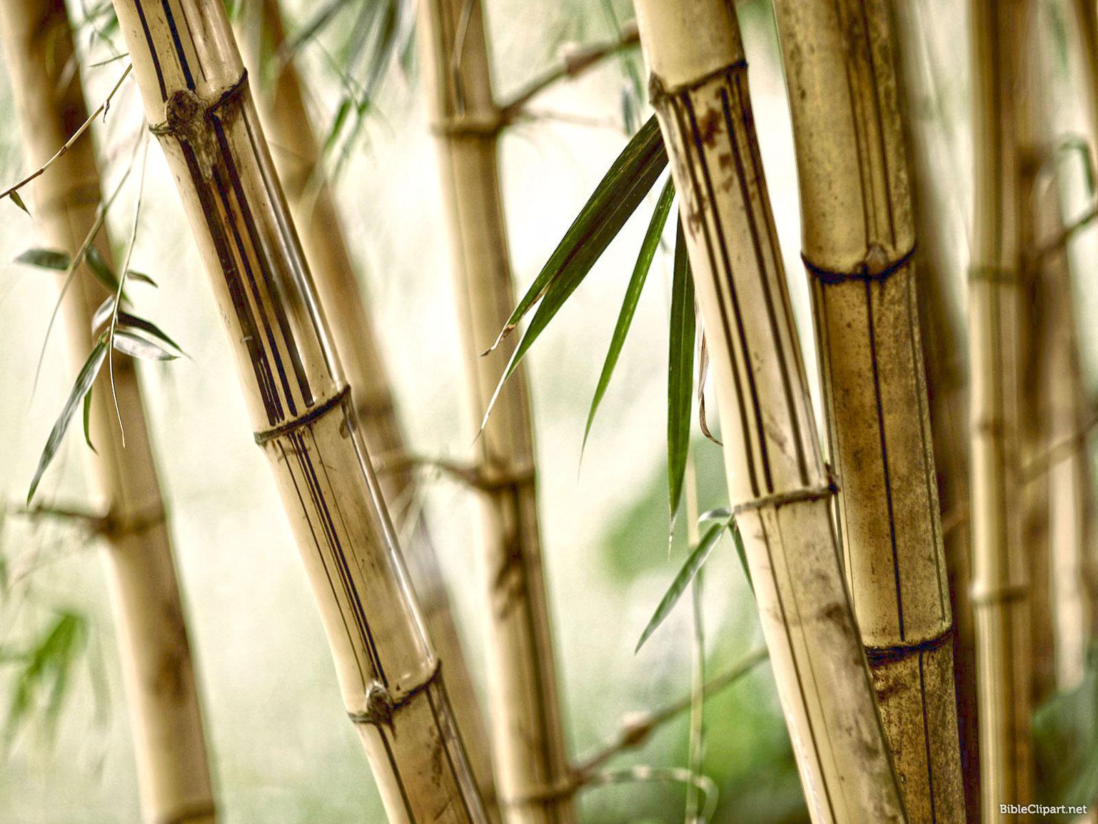 Bamboo Nature Background